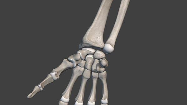 anatomie poignet docteur thomas waitzenegger chirurgien orthopedique paris 16